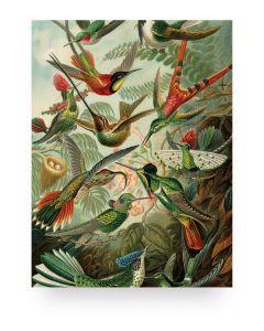 Print op hout Exotic Birds van KEK Amsterdam